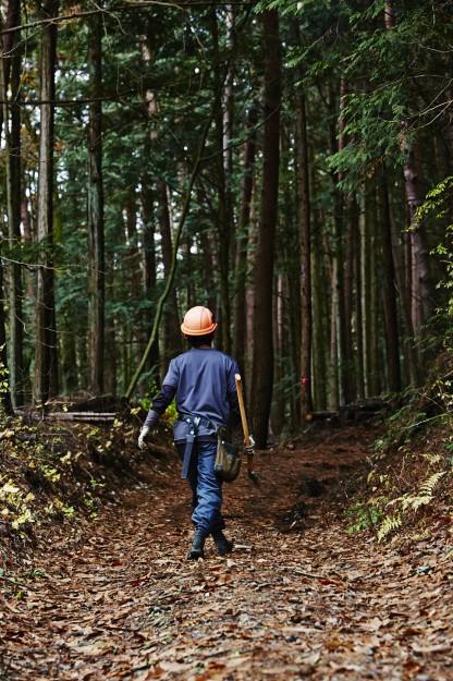 間伐を必要とする人工林