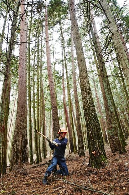 間伐材の利用で林業を活性化